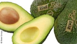 Bild: Avocados mit Laser-Logos; copyright: Rewe Group