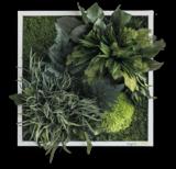 Pflanzenbild: Pflanzeninseln 35x35cm