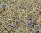 WILDSPITZE HIMMELBLAU – Alpine Hay with Cornflower Petals blue
