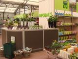 Ladenbau Pflanzen Theke